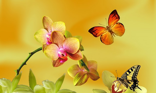 orchidej s motýlky