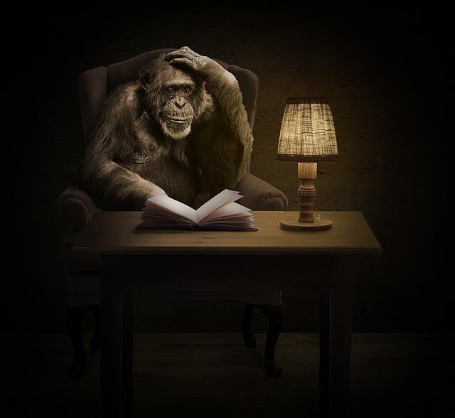 šimpanz u stolu