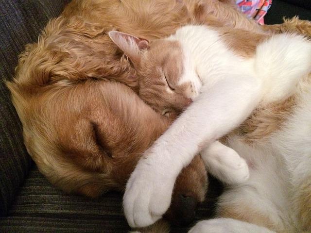 láska kočky a psa