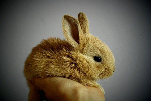 Kúpte si králika