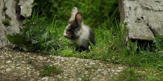 králík na zahradě