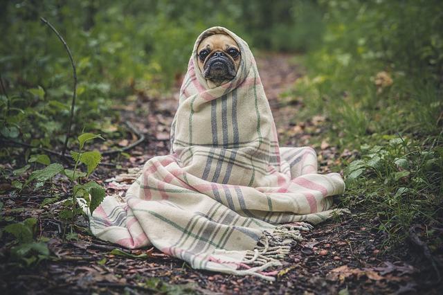 Sezónne alergie u Vašich psíkov