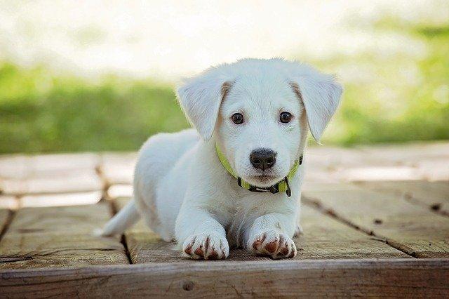 Zdravie psa