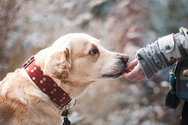 Ako si vybrať obojky pre psov proti kliešťom