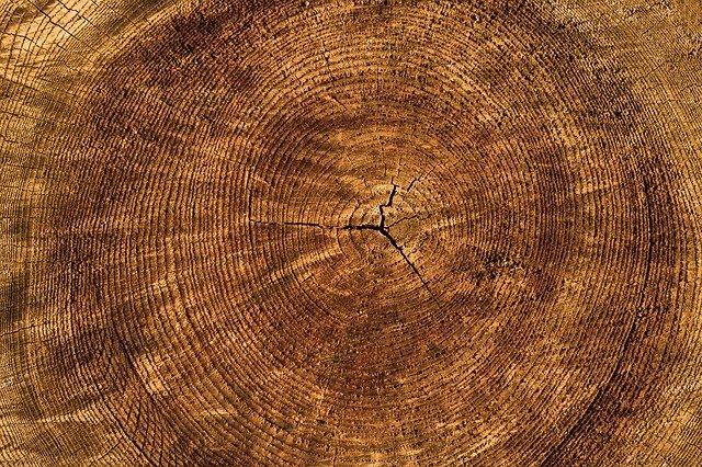 textura stromu
